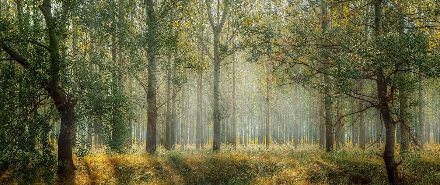 图解随机森林算法